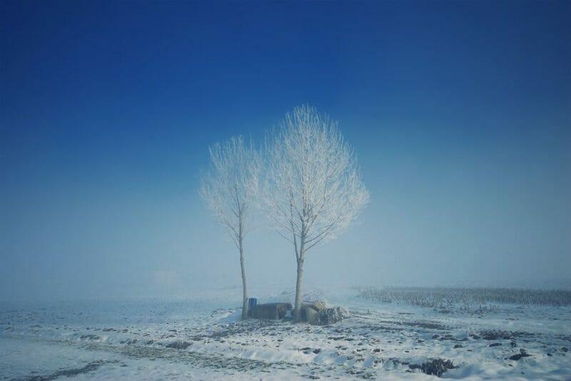 arbre Alessandro Pautasso