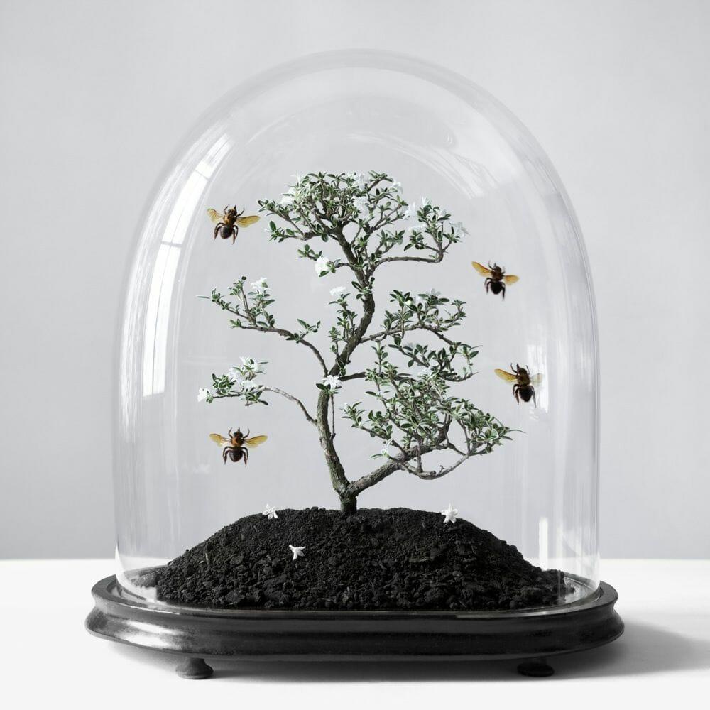 arbre sous verre