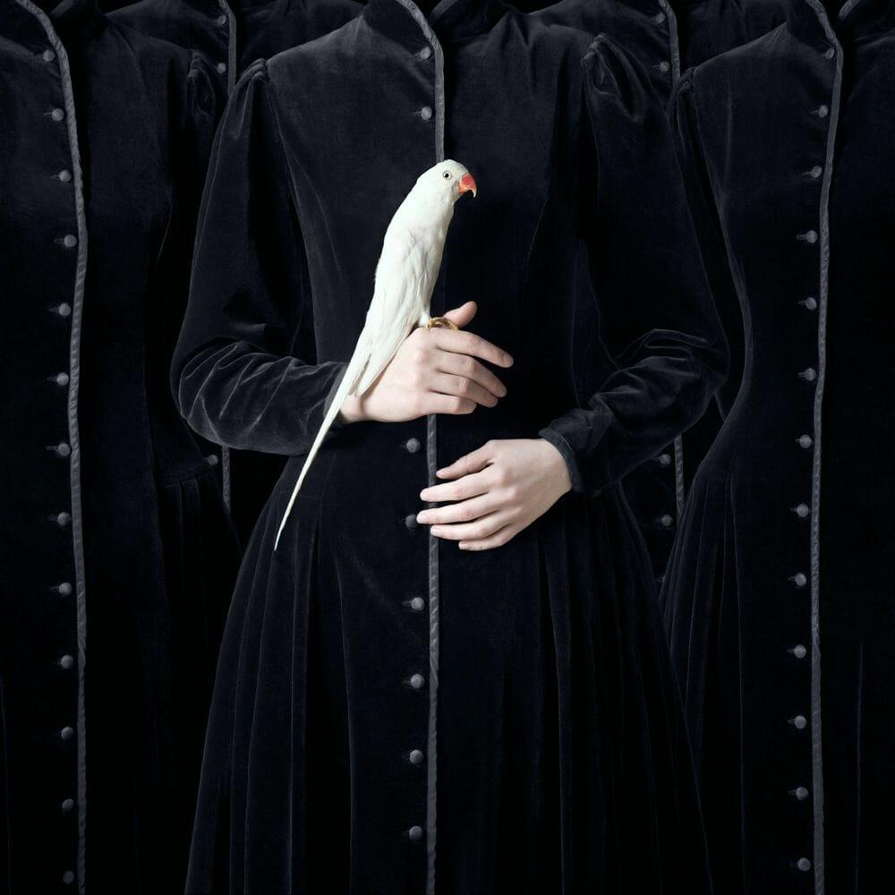 Juliette Bates photo oiseaux