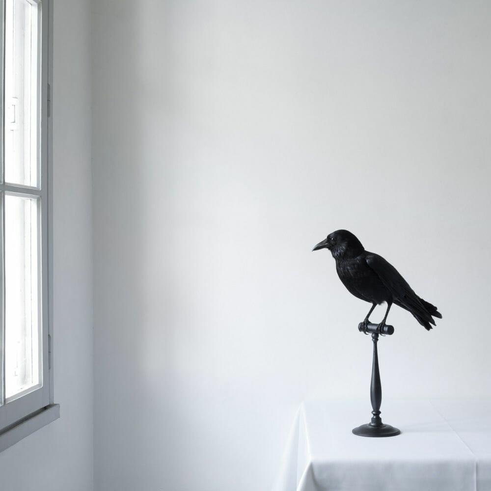 Juliette Bates photo corbeau