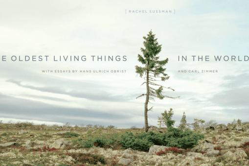 Rachel Sussman photographie les choses les plus vieilles du monde 4