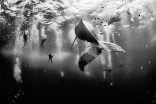 Concours National Geographic : avaler du plancton et toucher les étoiles en photos 11