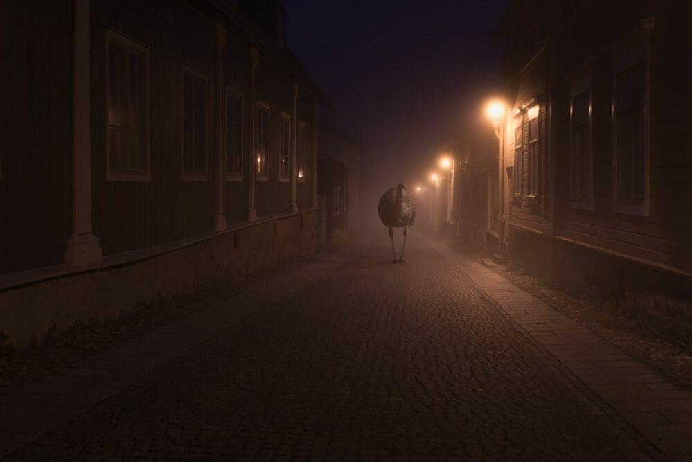 imaginaire Mikko-Lagerstedt-Emu