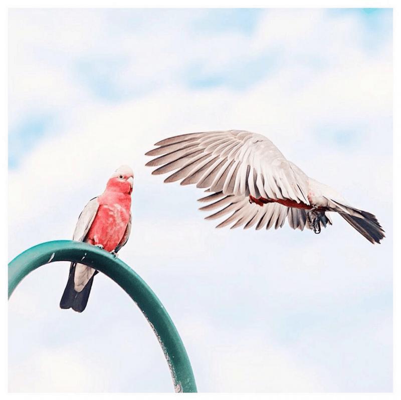 curd oiseau 1