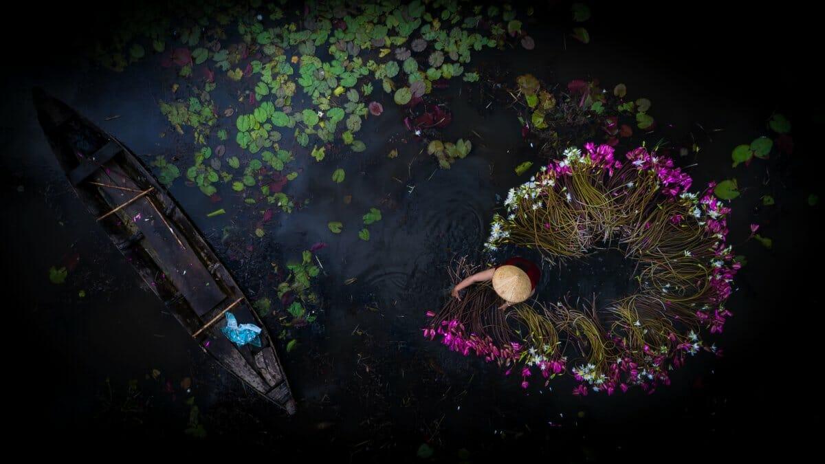 fleur cueillette vietnam