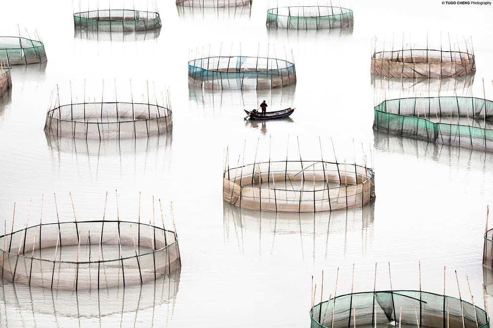 Tugo Cheng Circles - Fujian #16