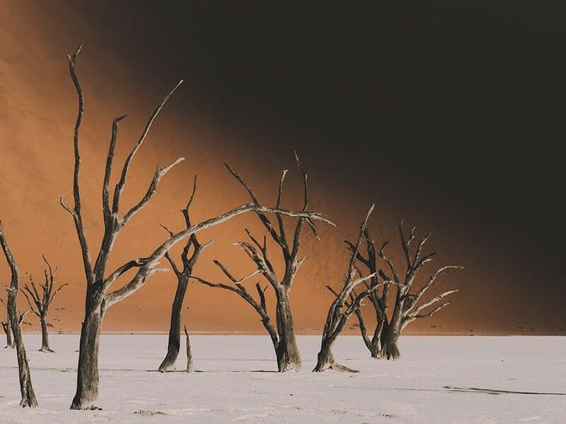Une pause dans le désert de Namibie 1