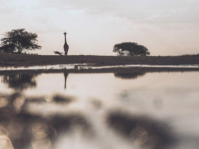Etosha National Park 2
