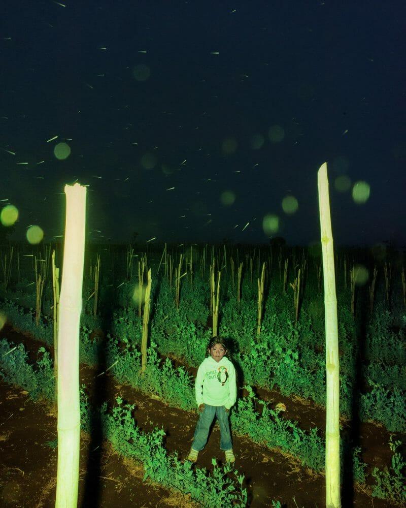Petite fille debout au milieu de plantations, RoadTrip guatemala, Benoit Paillé