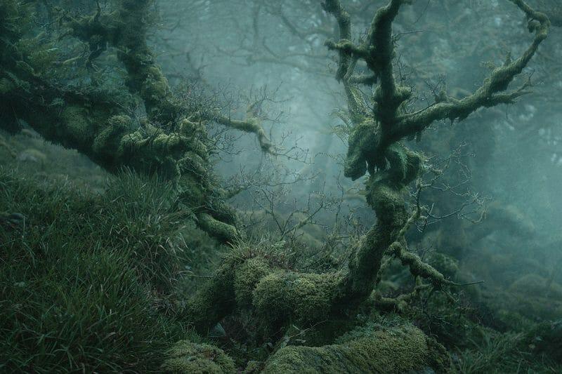 """""""Atteindre"""", cet arbre quasi-humain semble vouloir atteindre les autres autour de lui"""