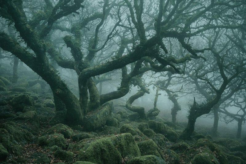 Mauvais virage de Neil Burnell dans le bois de Wistman