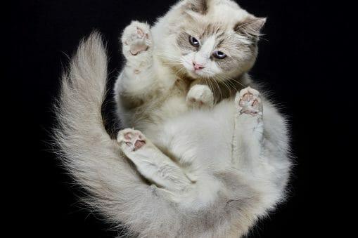 Portraits de chats insolites réalisés par l'équipe d'Underlook 3