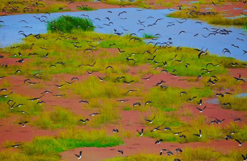 oiseaux photographie
