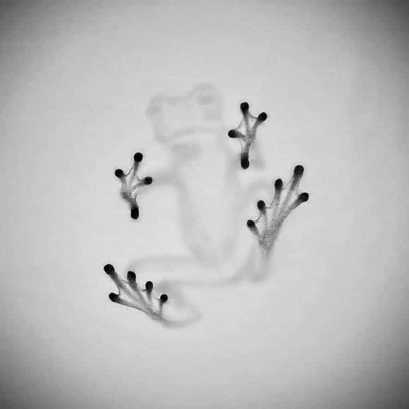 Willie Hsu grenouille
