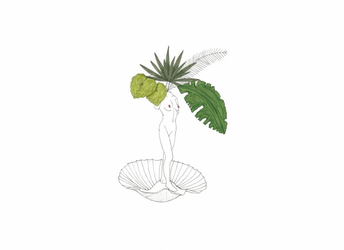dessin plante