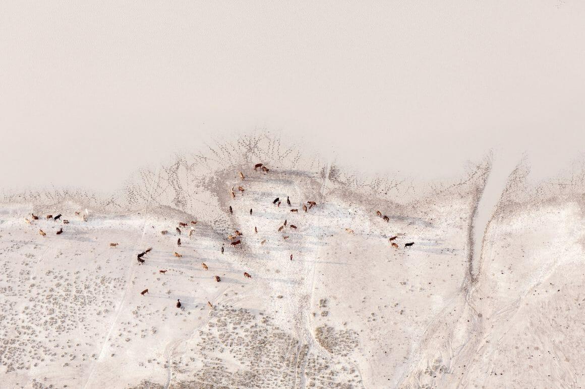 troupeau en train de s'abreuver afrique Zack Seckler