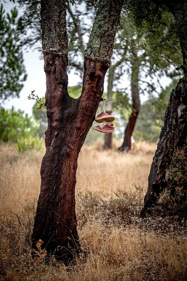"""Photographie d'un chêne-liège avec les sneakers """"Le Petit Gascon"""" de couleur rouge et en coton. Les sneakers sont accrochées dans l'arbre."""