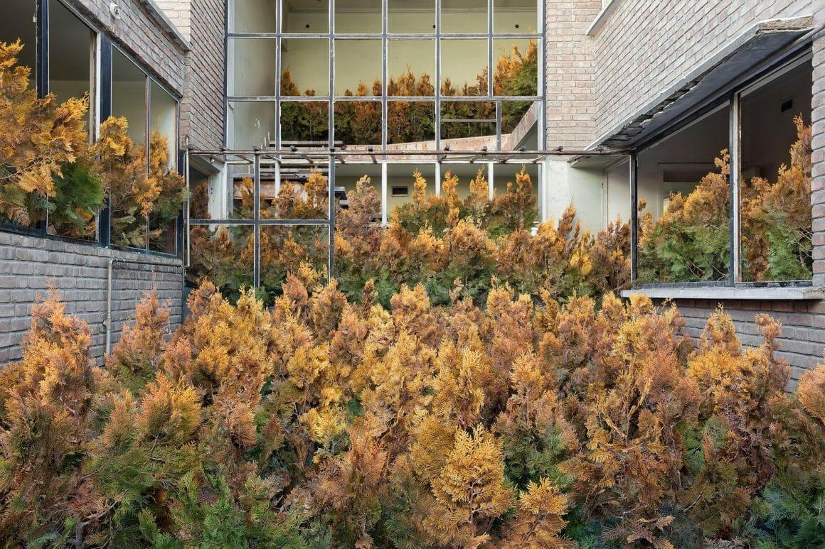 Forêt qui pousse au beau milieu d'un bâtiment