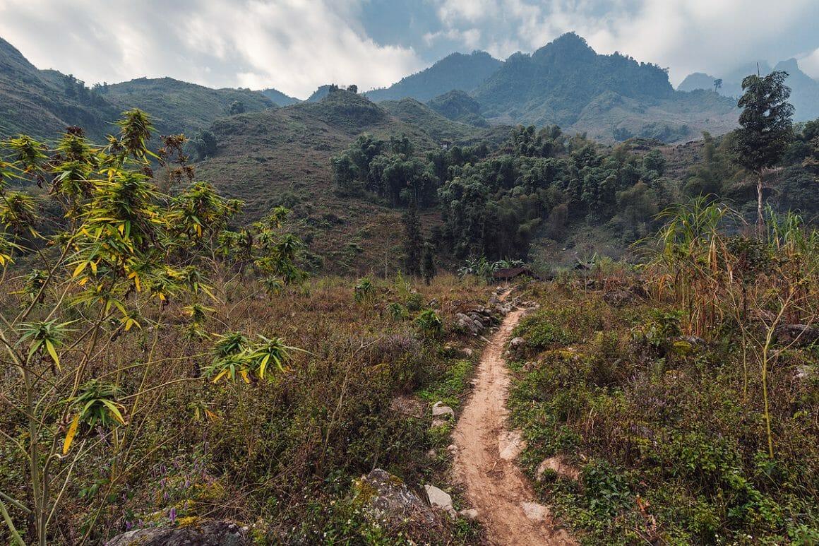 Voici une des impressionnantes photographies de Lukas Furlan : Vue d'un petit chemin en montagne parmi des herbes haute avec au loin la montagne.