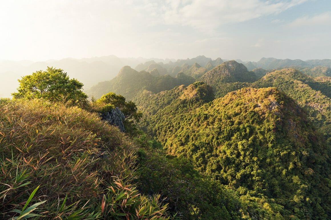Voici une des impressionnantes photographies de Lukas Furlan : Vue sur les montagnes recouvertes d'arbres depuis le sommet d'une montagne.