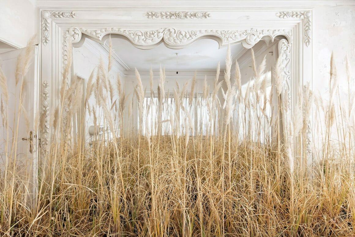 Champ de blés au milieu de moulures