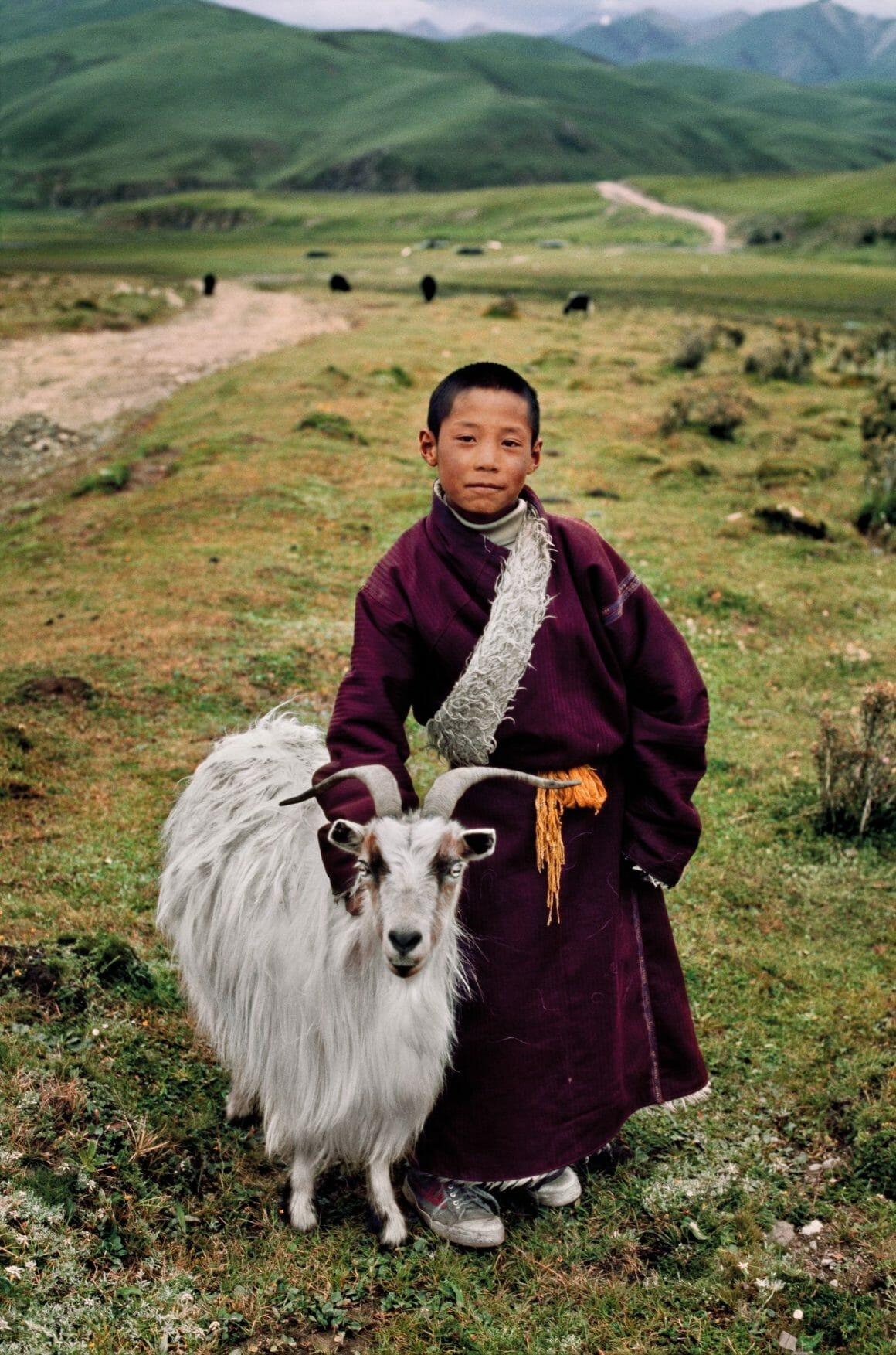 """Steve McCurry, """"Animals"""". Photographies publiées aux Editions Taschen, Tibet, 2011."""