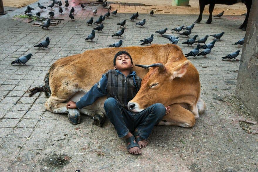"""Steve McCurry, """"Animals"""". Photographies publiées aux Editions Taschen, Nepal, 2013."""