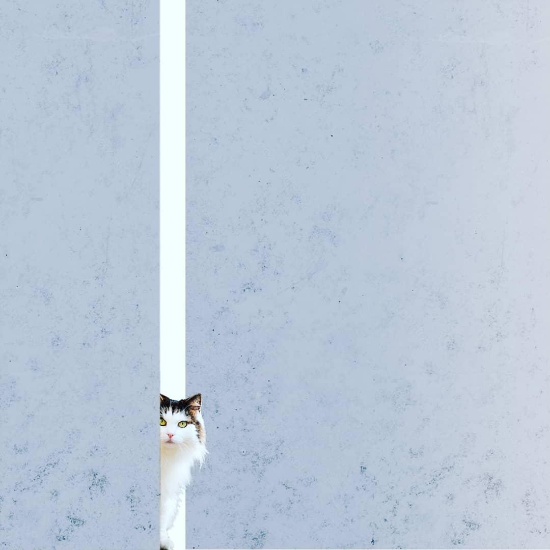Monochrome et chat