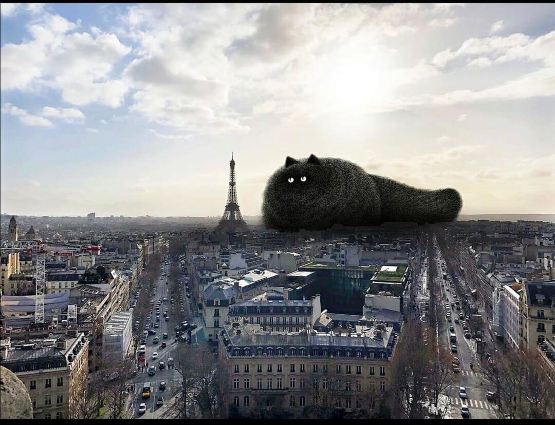 Chat à Paris de Kamwei Fong
