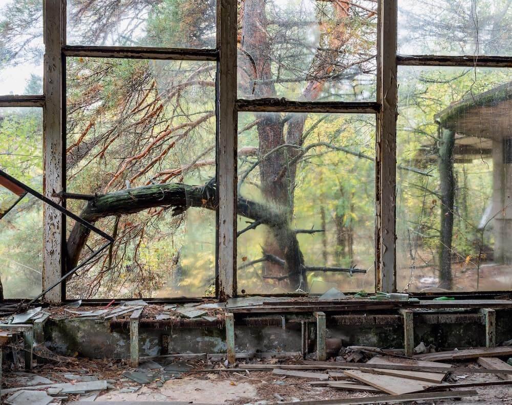 David Mcmillan, fenêtre donnant sur une forêt.