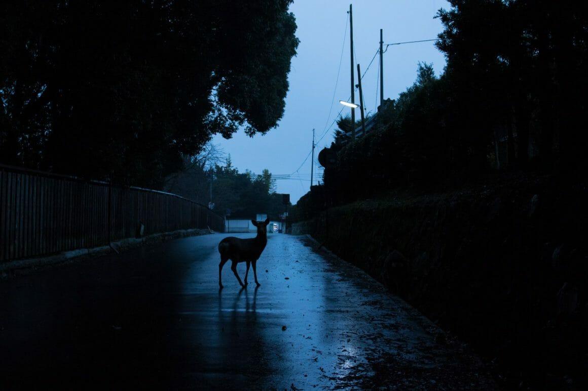 Yoko Iishi, Before Dawn, un cerf dans l'obscurité.