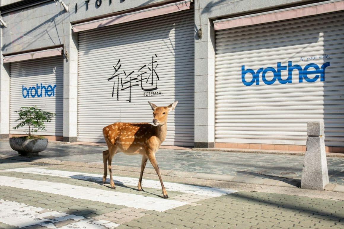 Yoko Iishi, Walk around, un cerf traversant au passage piéton.