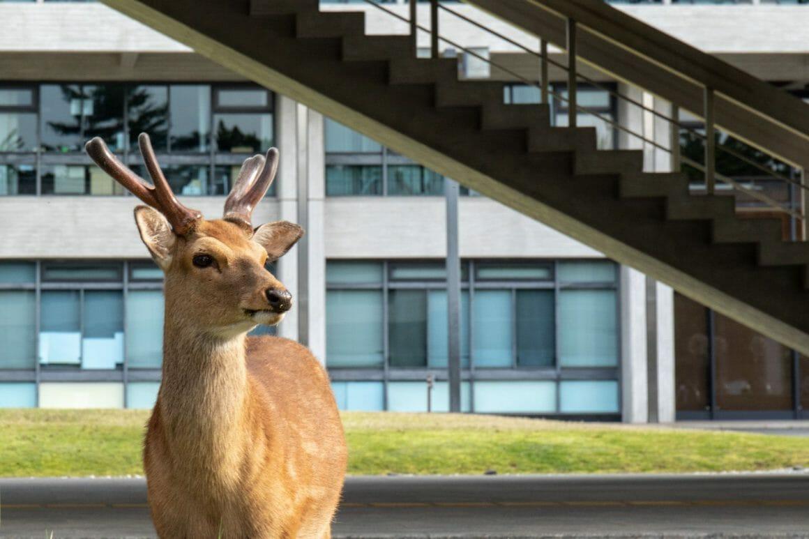 Yoko Iishi, Appointment, un cerf devant des escaliers.