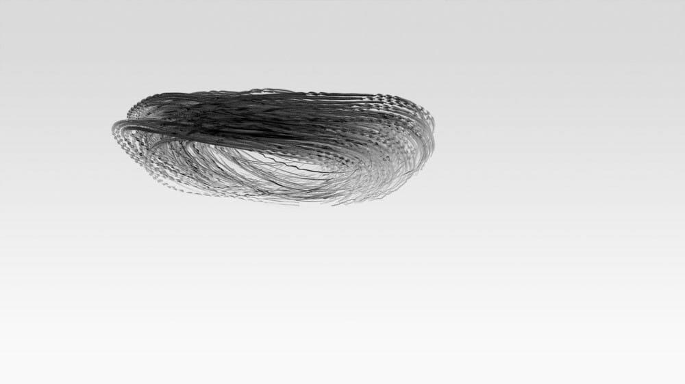 Xavi Bou Ornitographies photo noir et blanc