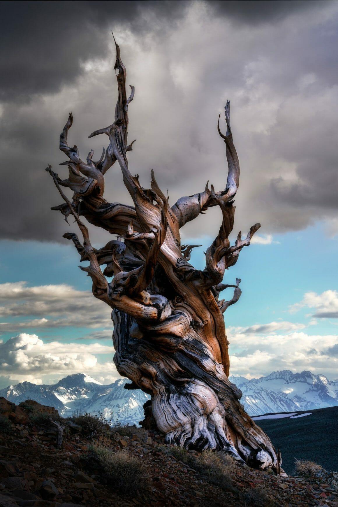Eastern Sierra, California, USA by Carlos Cuervo (United States)