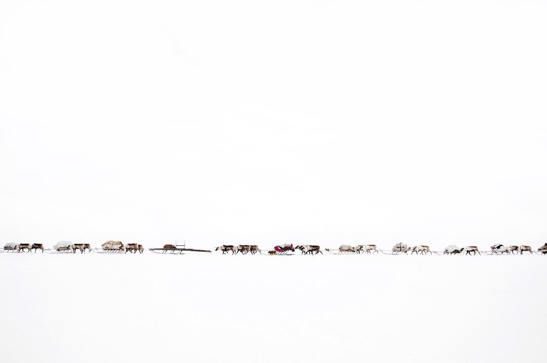 Caravane de nomades Nenets Herders Of Siberia