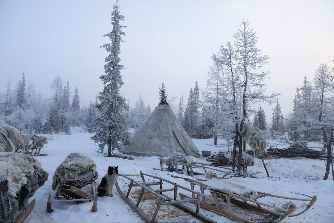 Campement traditionnel Nenets