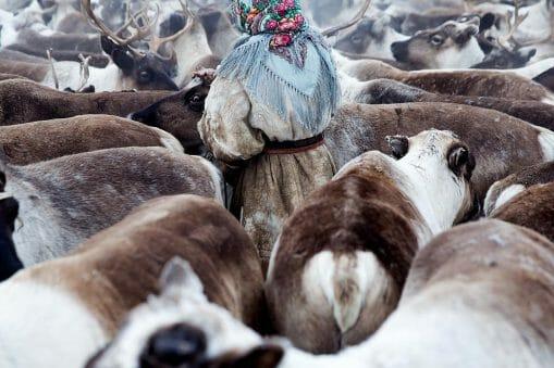 Herders Of Siberia