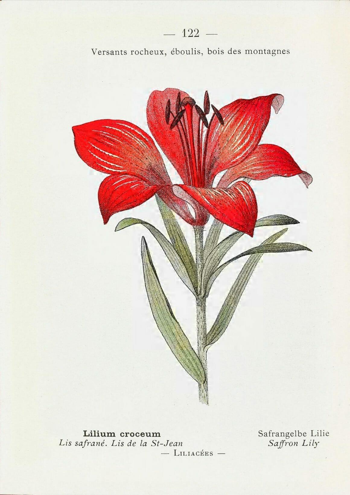flore Alpes et Pyrénées