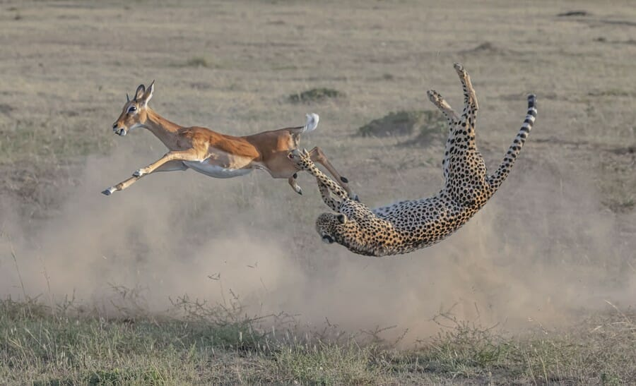 bigPicture Natural World Photography Competition - Speed and strategy