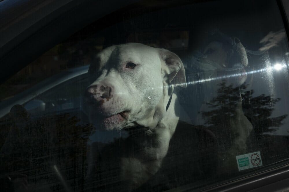 Kevin Fletcher avenue of roses chien blanc voiture