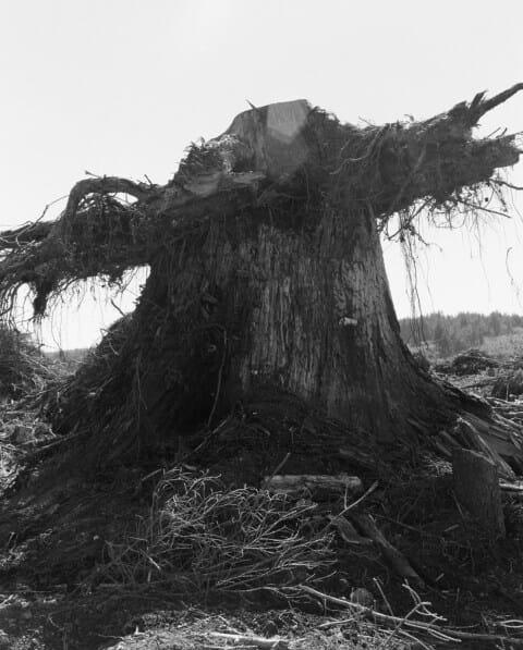 gros tronc arbre Robert Adams