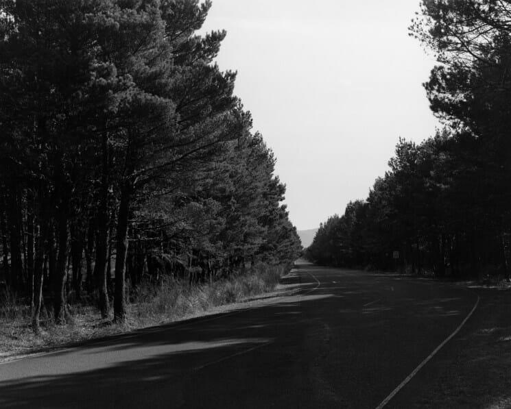 route sapins arbre Amérique arround the house & forest roads