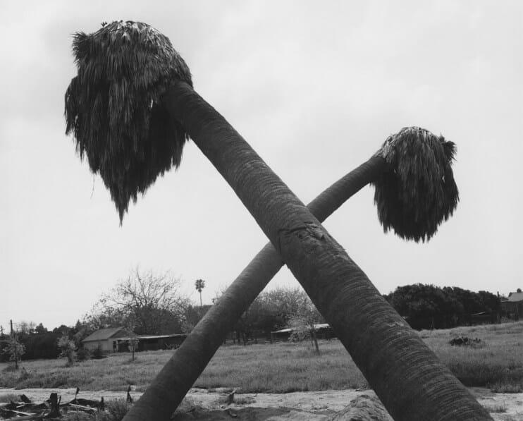 palmiers vents tombent