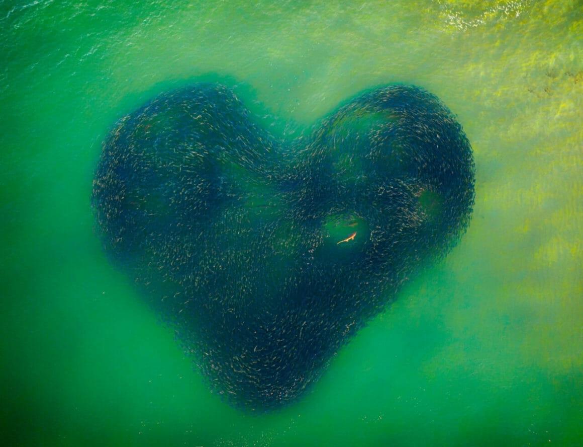 Le grand gagnant du Drone Photo Award 2020 est Jim Picôt avec sa photo Love Heart of Nature