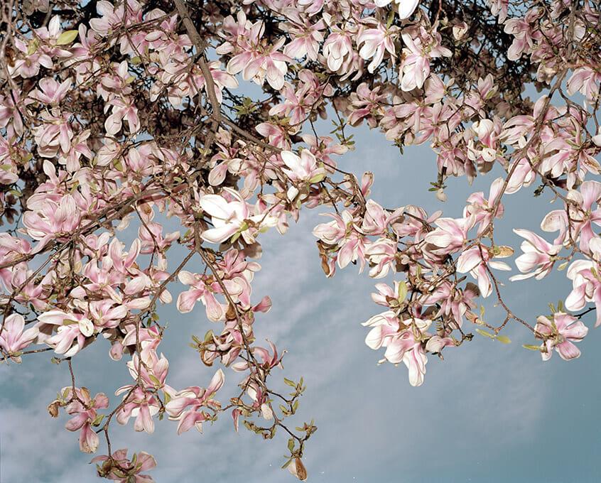 Brendan George Ko amazing blossom