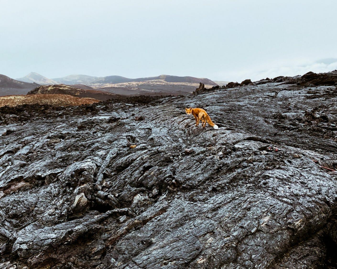 Flanc d'un volcan, lave séchée, un regard marche dessus