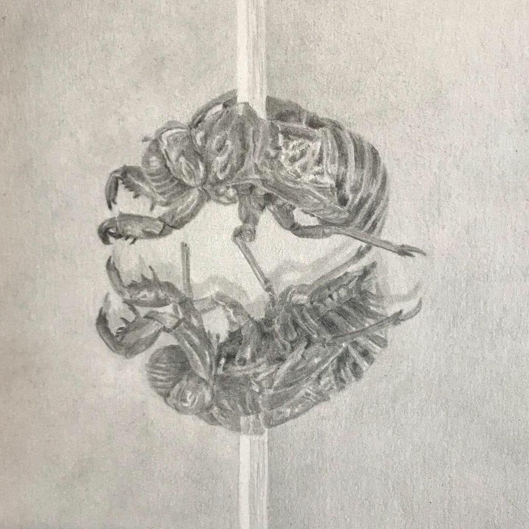 Deux insectes forment un cercle et sin traversé par une espèce de pic blanc