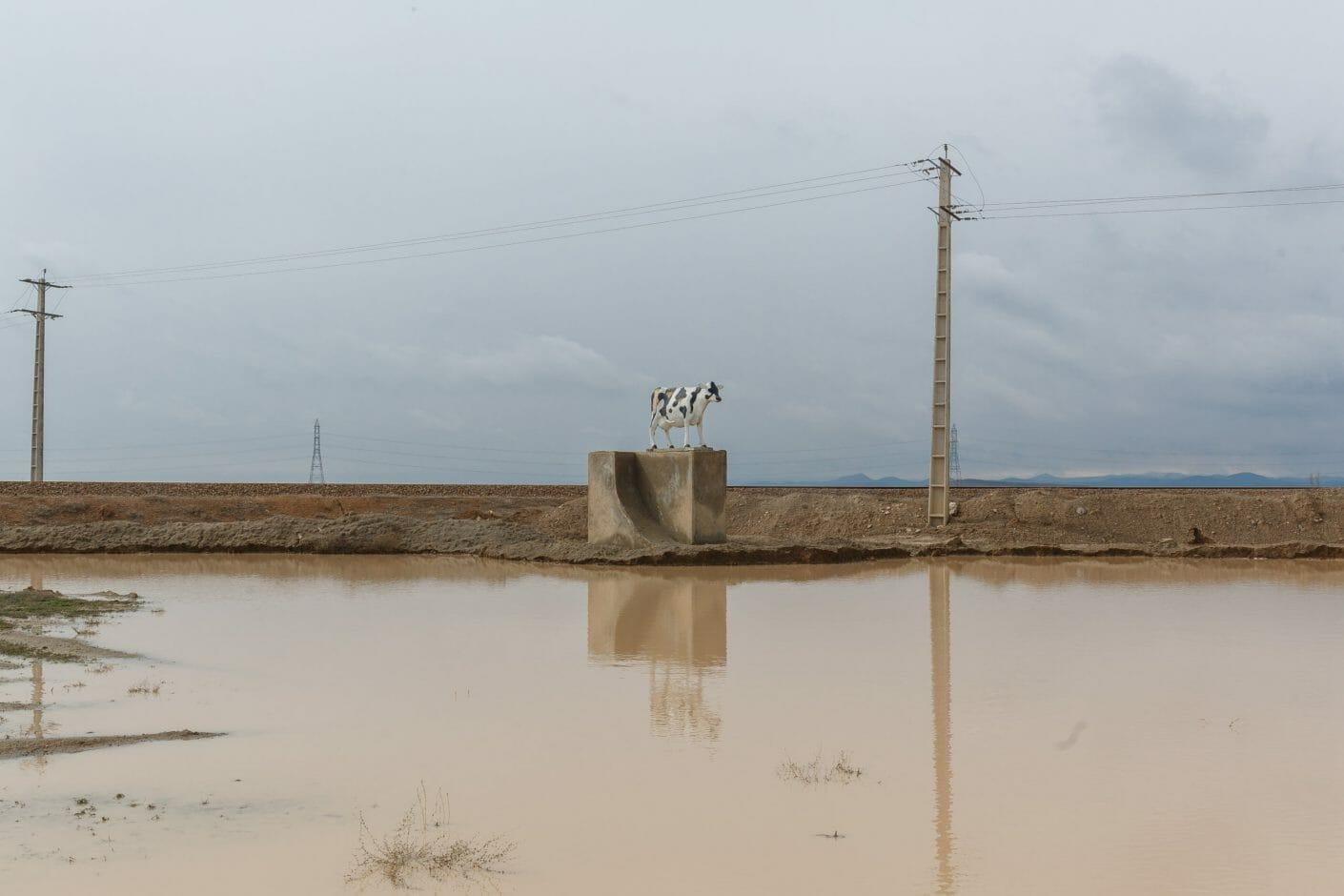 Au milieu de la campagne, sorte de marre boueuse avec une sculpture de vache sur un bloc de béton
