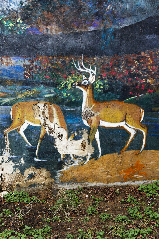 Peinture murale abîmée photographiée par Jordan Baumgarten